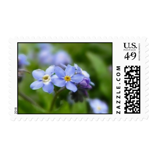 Delicate Forget Me Not Flowers Postage