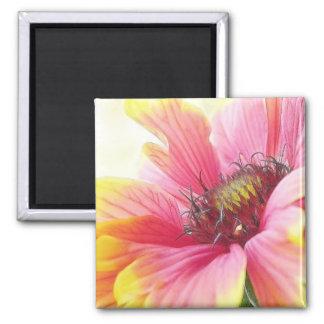 Delicate Gaillardia Blossom Magnet