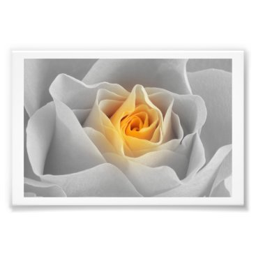 Professional Business Delicate Gray Rose Photo Print