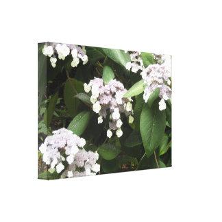 Delicate Hydrangeas Canvas Print