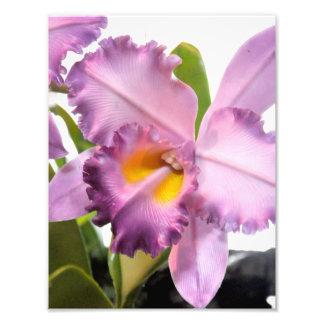Delicate light purple orchid photo print