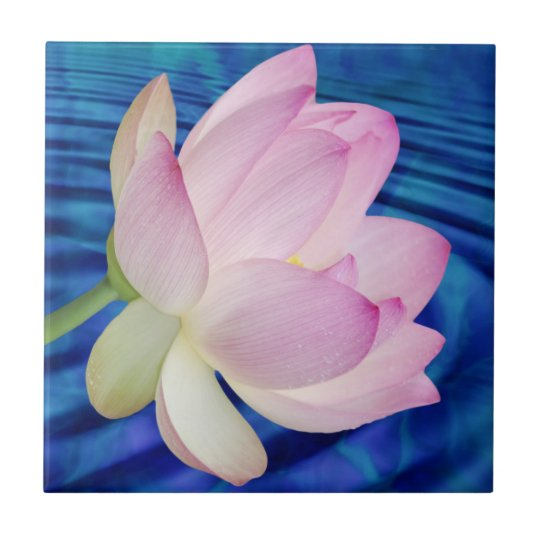 Delicate Lotus Flower And Meaning Ceramic Tile Zazzle