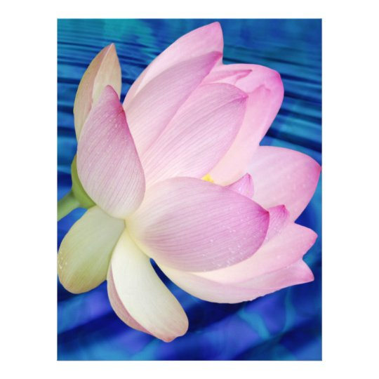 Delicate Lotus flower and meaning Letterhead