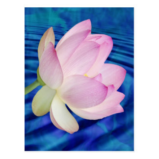 Delicate Lotus flower and meaning Postcard