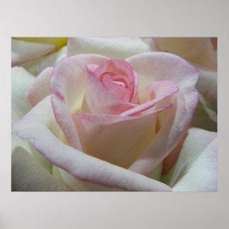 Delicate Love Rose Poster
