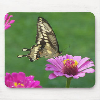 Delicate Monarch Mouse Pad