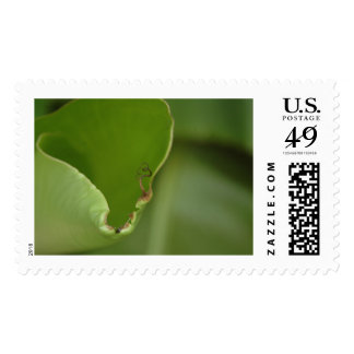 Delicate New Growth, Banana Leaf Photo Detail, V16 Postage