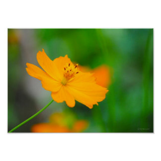 Delicate Orange Flower Framable Print