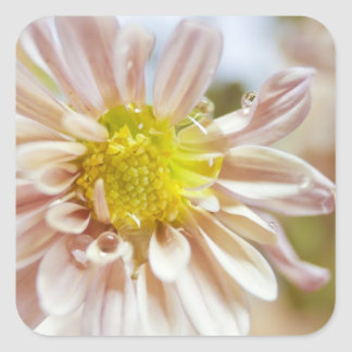 Delicate Peach Flower and Water Drop Square Sticker
