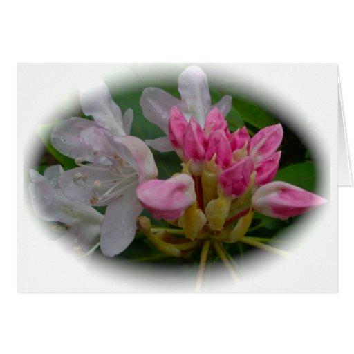 Delicate Pink Azaleas Card