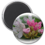 Delicate Pink Azaleas Magnets
