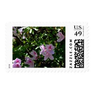 Delicate Pink Azaleas Postage Stamp