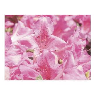Delicate Pink Flowers Postcard