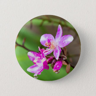 Delicate Pink Ground Orchid in a Tropical Garden Pinback Button