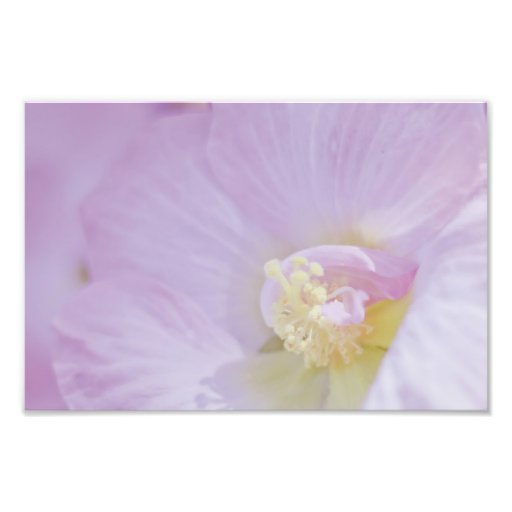 Delicate Pink Lavender Flower Photo Print