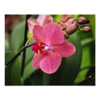Delicate pink orchid photo print