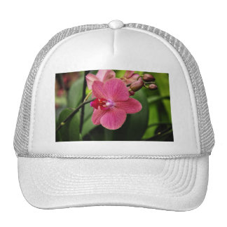 Delicate pink orchid trucker hat