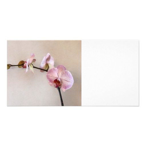 Delicate Pink Phalaenopsis Orchids Picture Card