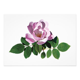 Delicate Pink Rose Custom Invitations