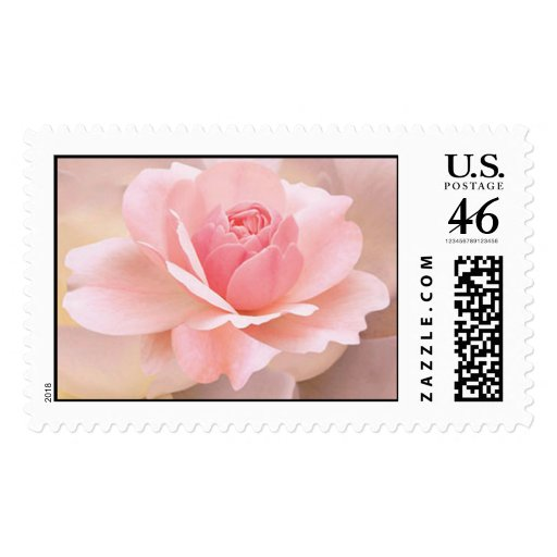 Delicate Pink Rose Postage Stamps