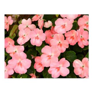 Delicate pink spring flowers postcard