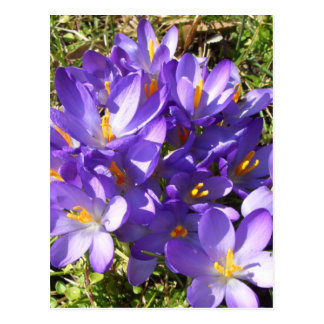 Delicate Purple Flowers CricketDiane Florals Postcard