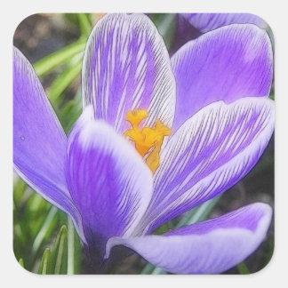 Delicate Purple Striped Crocus Square Sticker