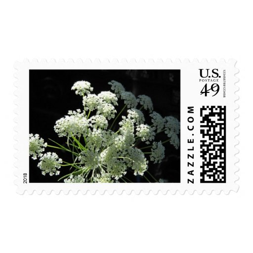 Delicate Queen Anne's Lace Postage Stamp