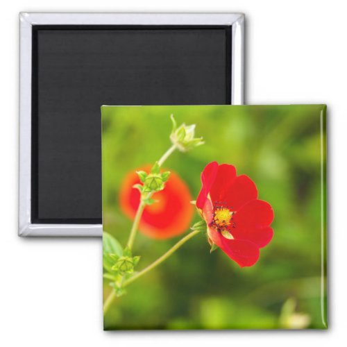 Delicate Red Flower Fridge Magnet