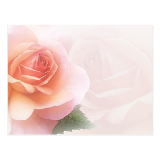 Delicate Rose All Occasion Post Card