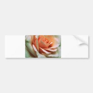 Delicate Rose Bumper Sticker
