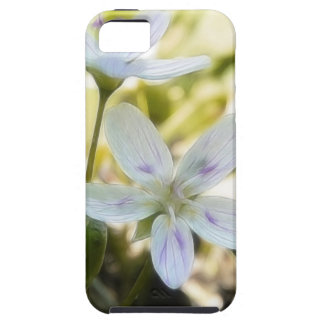 Delicate Spring Beauty Flowers iPhone 5 Case