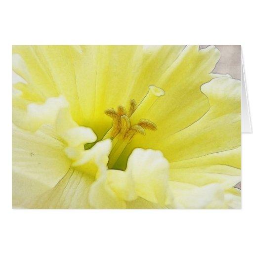Delicate Spring Daffodil Cards