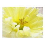 Delicate Spring Daffodil Postcard