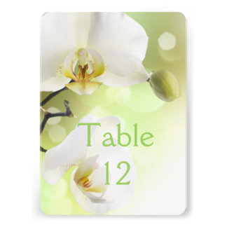 Delicate Spring White Orchids Table Number Card