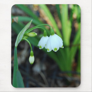 Delicate White Alleghany Spurge Flowers Mouse Pad