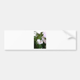Delicate White Flowers from Nature Bumper Stickers