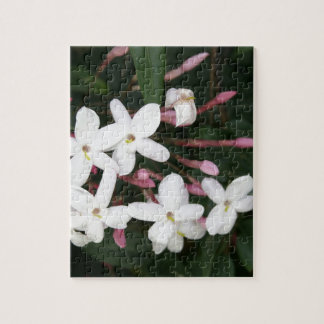 Delicate White Jasmine Blossom Jigsaw Puzzle