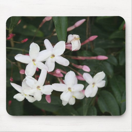 Delicate White Jasmine Blossom with Green Backgrou Mouse Pad