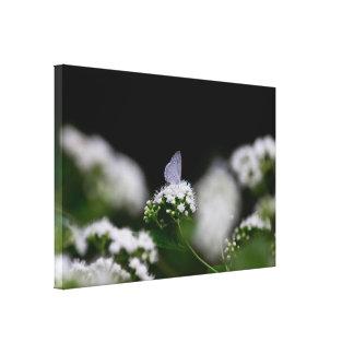 Delicate White Moth Canvas Print