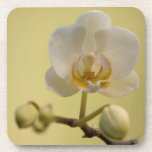 Delicate White Orchid Coasters