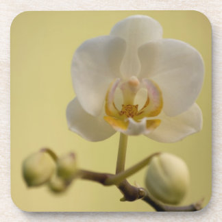 Delicate White Orchid Beverage Coasters