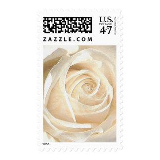 Delicate white rose, tissue effect / size S/M/L Postage