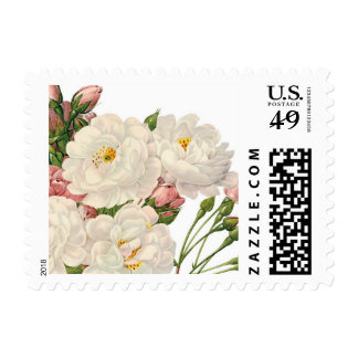 Delicate white roses postage