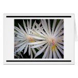 Delicate White Shooting Star Flowers Stationery Note Card