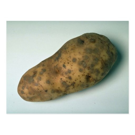 Delicious Potato Postcards