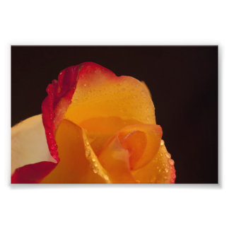 Delight photographic Print