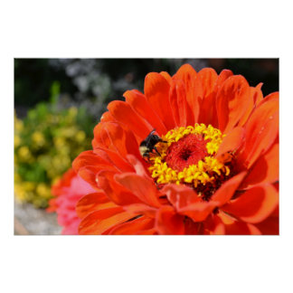 Delight- Zinnia and Bee Poster