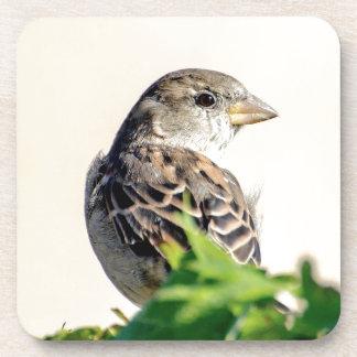 Delightful Bird Photograph Beverage Coaster