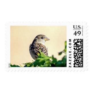 Delightful Bird Photograph Stamp